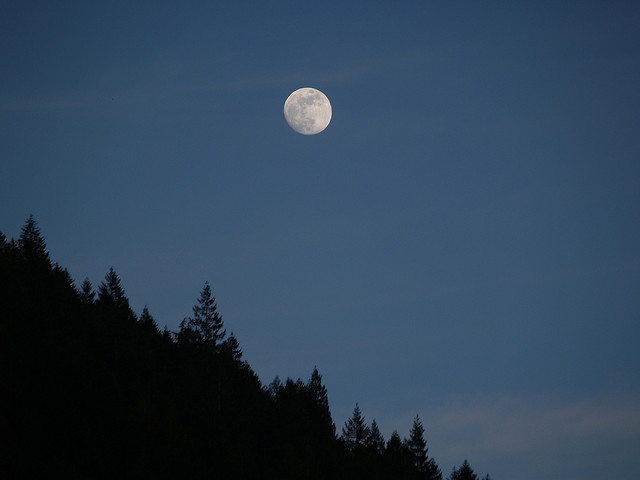 Moon over Douglas Firs