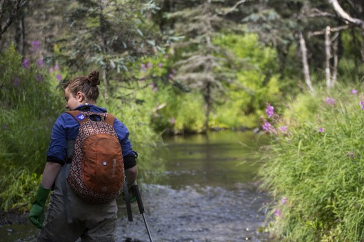 Sarah Schooler walks up one of Lake Aleknagik's many streams, counting and tagging sockeye salmon.