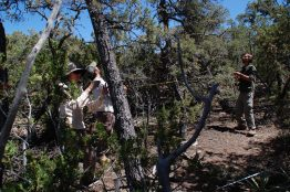 Abigail Swann, Dave Minor and Juan Villegas take measurements of live and dead trees in central New Mexico.