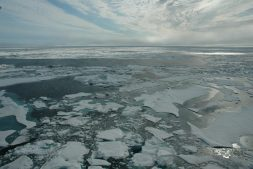 Arctic sea ice, as seen from an ice breaker ship in 2014.