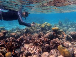 James Dimond snorkeling to collect coral in Belize. He collected 27 coral samples from different environments and with a range of branch thicknesses.