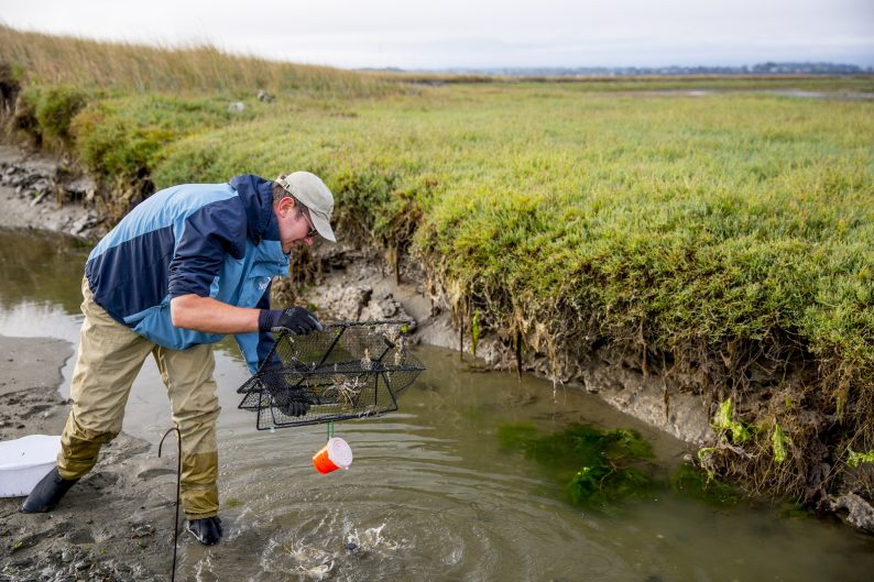 Jeff removing a trap at Sequim Bay.