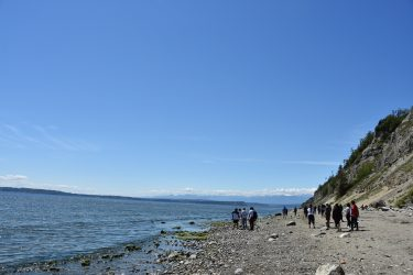 Students in Terry Swanson's Introduction to Geology course walking north along Double Bluff Beach on Whidbey Island, examining geologic features as they go.