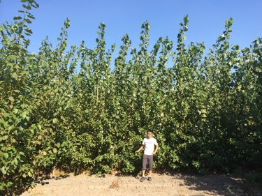Chang Dou standing in front of poplar tree stand