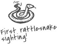 Sketch of a rattlesnake