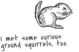 Sketch of a ground squirrel