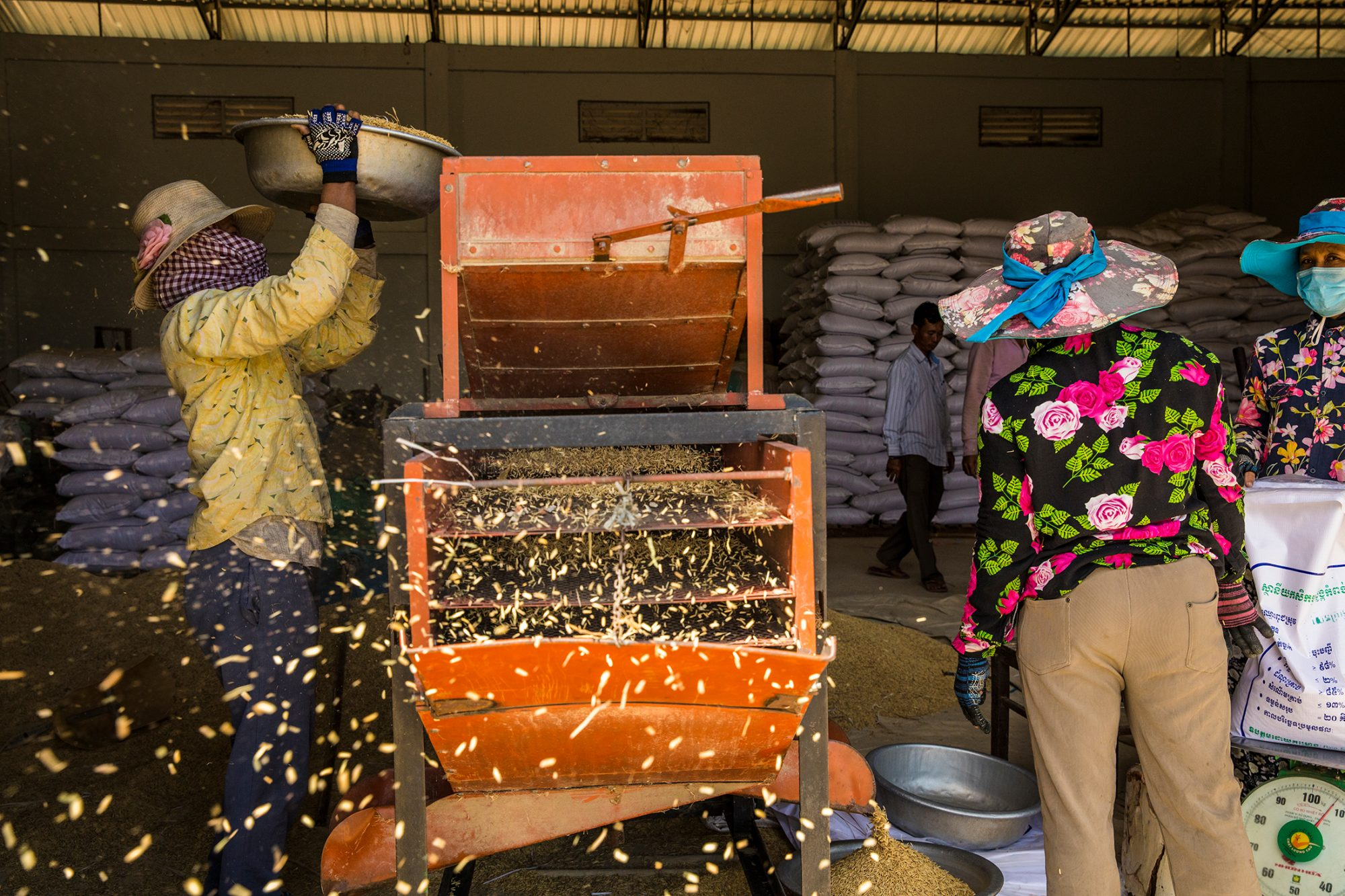 A woman pours rice into a machine that shoots rice husks into the air and separates the kernels