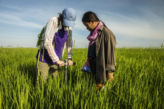 Two women stand in a field and look down at a soil sampling instrument sticking out of the ground