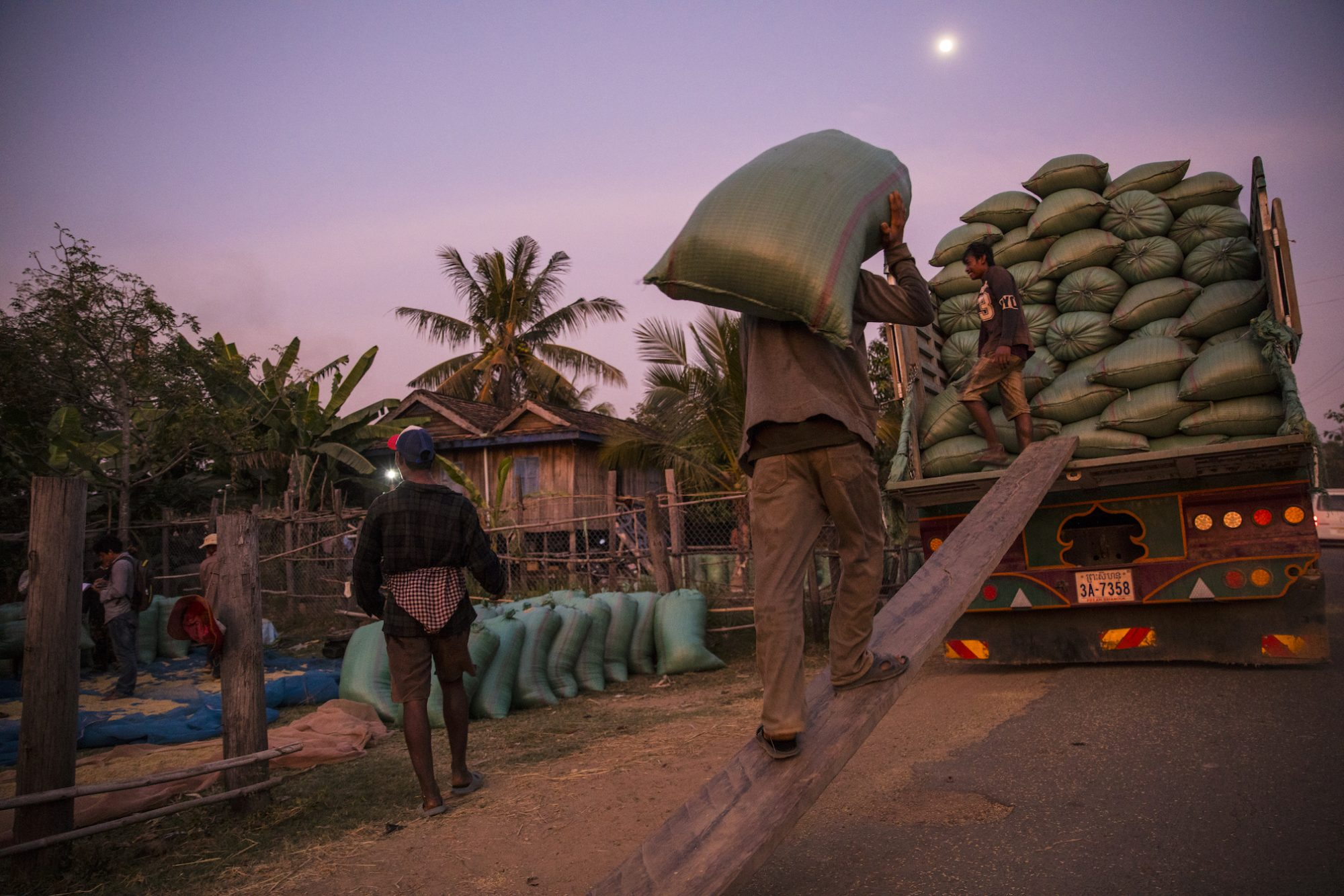After dusk, a man loads rice onto a truck laden with dozens of other huge green bags