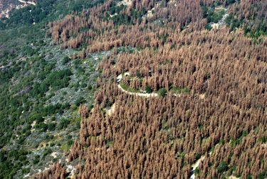 This August 2016 aerial photo of the Sierra Nevada Mountains in central California shows widespread tree loss. The new study shows changes here can affect plant growth across the country.