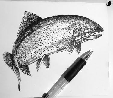 Spencer Showalter recently chose to draw a rainbow trout, Washington's state fish, for #SundayFishSketch.