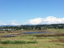 The Qwuloolt project, north of Everett, sought to restore the mouth of the Snohomish River — key salmon habitat — by breaching dikes that had for years allowed the area to be used as farmland. The marsh is seen here in 2016.