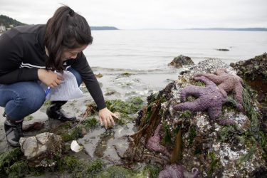 A marine biology student surveys the diversity of invertebrates and algae in an intertidal zone.