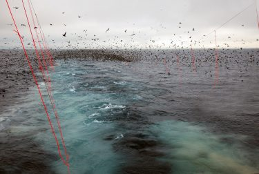 Deploying behind boats in Alaska longline fisheries has saved thousands of seabirds per year.