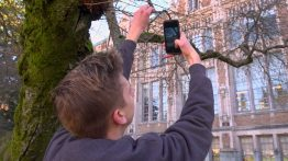 TJ VanderYacht collects data from one of the cherry trees in the UW Quad.