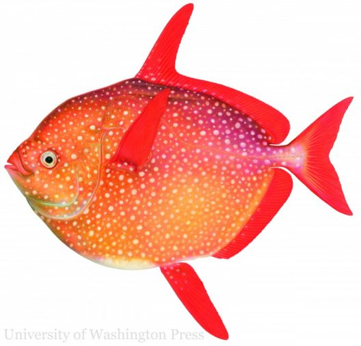 The Opah (Lampris guttatus) FISH