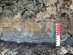 A tsunami deposit from the year 1700 Cascadia Subduction Zone earthquake.